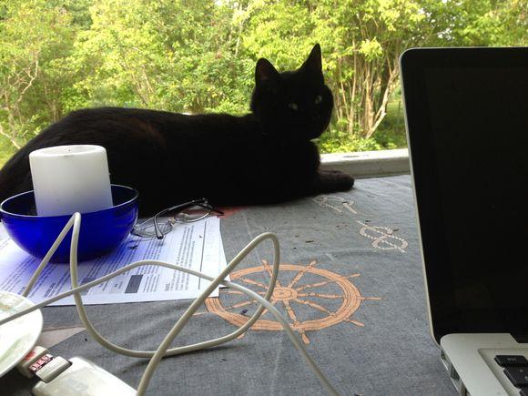 Jobb vid datorn med assisterande katt